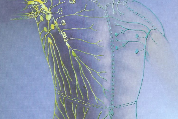 How do Scars Affect the Lymphatic System